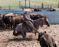 25,000 Novice Horse Reserve Champion