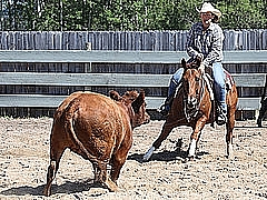 Tracy McClintock riding Talk Low